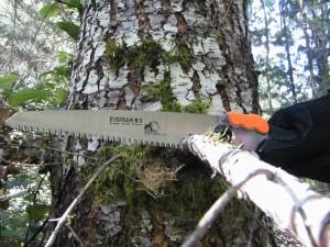 EverSaw 8..0 cutting branch